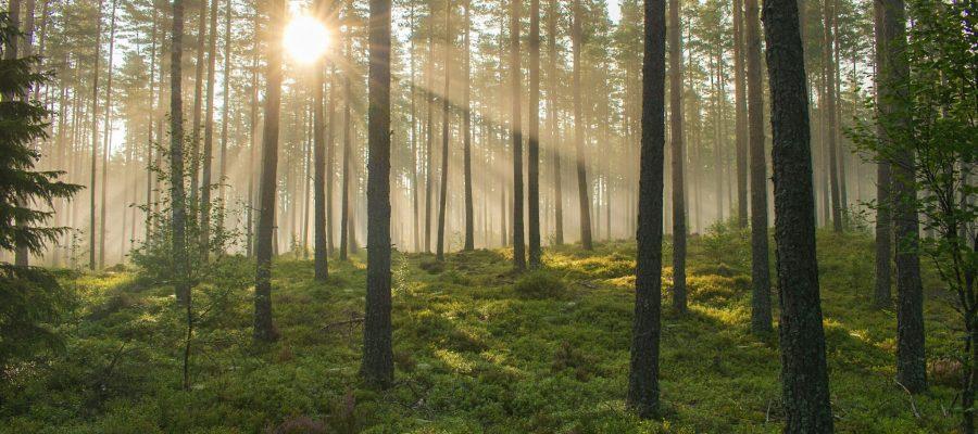 Att campa i skogen är en otrolig del av friluftslivet